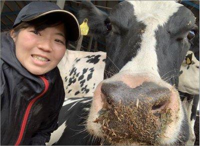 nagasakisan-cow.jpg